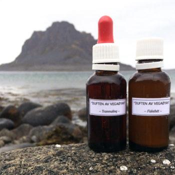 Utstilling Duften Av Vegaøyan